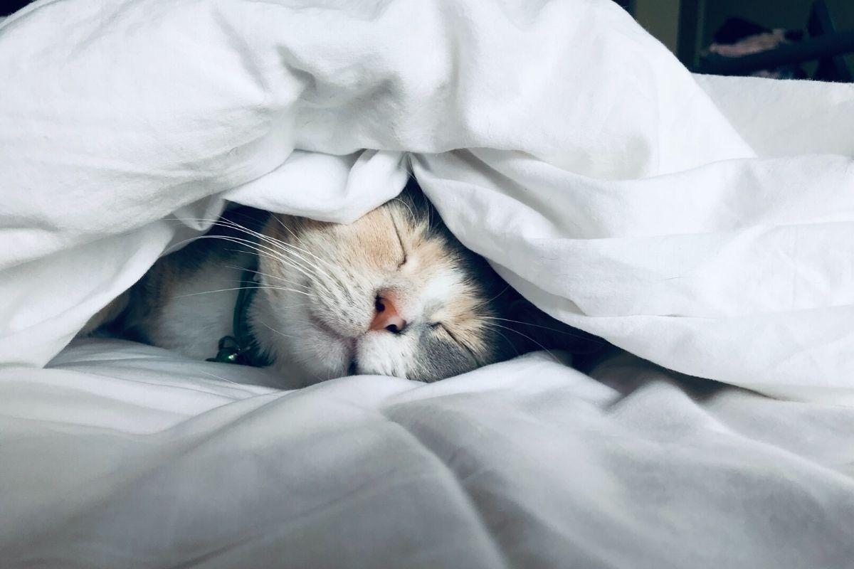 article fatigue 1 - Lutter contre la fatigue : 10 conseils naturels